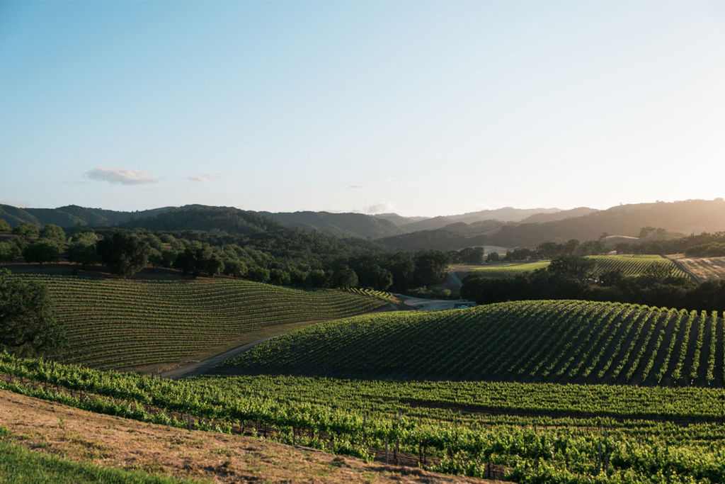 paso robles wineries with views