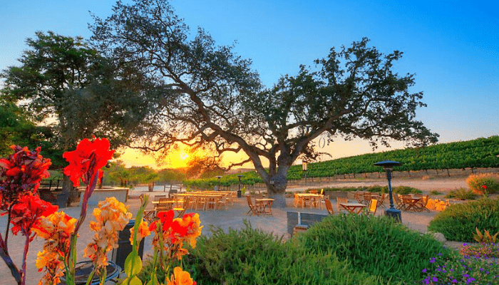 cass winery in paso robles
